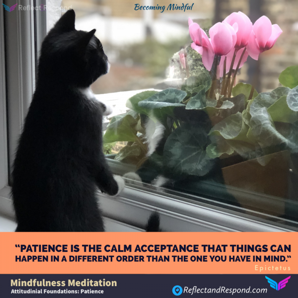 Mindfulness-Seven-Attitudinal-Foundations-Patience
