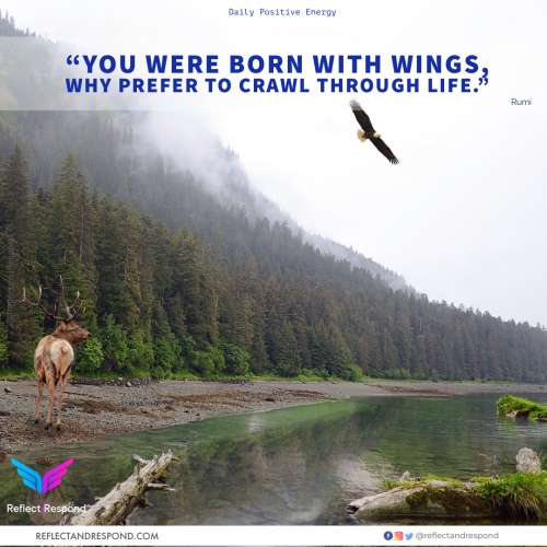 You were born with Wings - Rumi